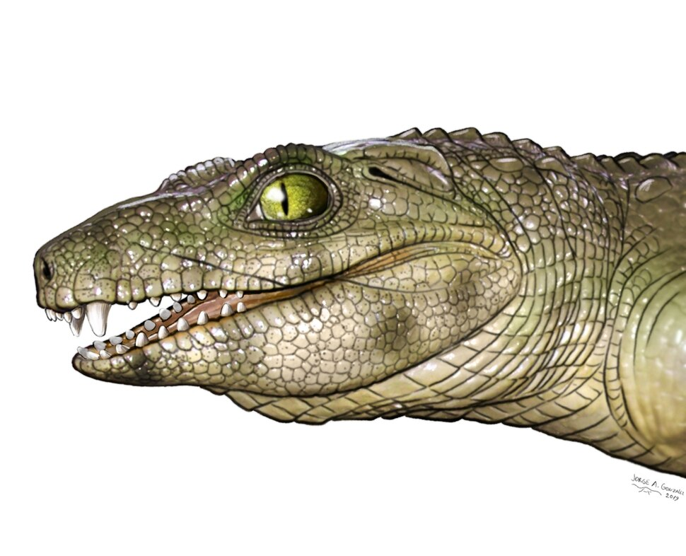 (Illustration courtesy of Jorge Gonzalez) A graphic shows what an extinct carnivore relative of crocodiles might have looked like.