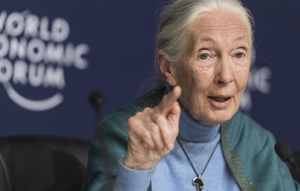 Jane Goodall, Winner The 2021 Templeton Prize, Discusses Religion And  Science