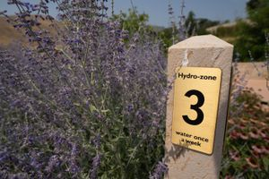"""(Francisco Kjolseth   The Salt Lake Tribune) Red Butte Gardens, offers visitors a tiered view of drought-friendly gardening practices as seen during a recent visit to the gardens on Monday, July 26, 2021. As severe drought grips the west, a visual representation of """"hydrozoning"""" offers people a way to arrange different plant varieties according to their water needs. From varieties that don't need watering all the way to the most selfish of plants."""