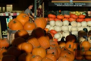 ( Francisco Kjolseth | Tribune file photo ) As pumpkin season began in 2015, Whole Foods in Sugar House had all shapes, sizes and colors.