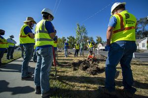 (Rick Egan     The Salt Lake Tribune)   Tony Gliot Division Director for Urban Forestry demonstrates how to plan a tree, to volunteers from Dominion Energy, who gathered to plant 205 trees in the Fairpark neighborhood, on Thursday, Oct. 1, 2020.
