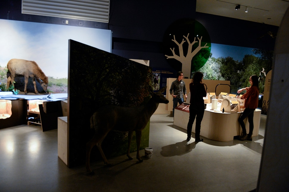Meet the critters living around us, in Natural History Museum of Utah's new exhibit