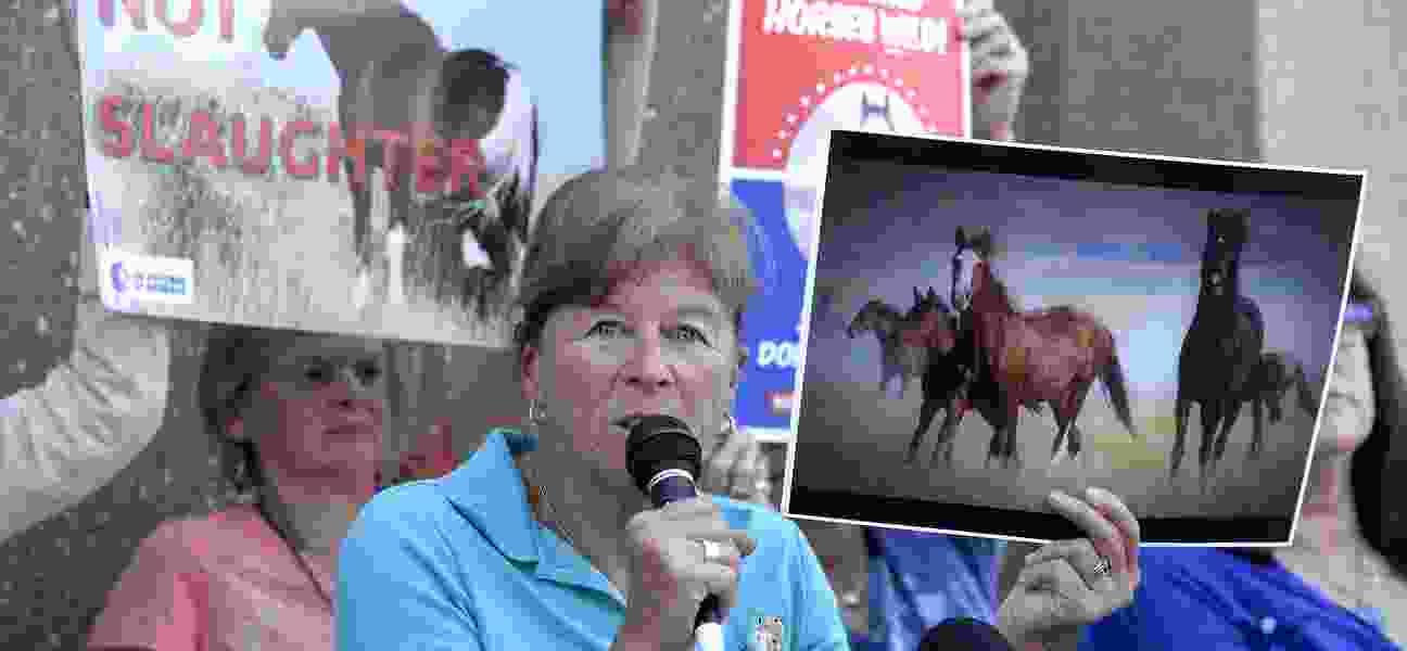 Ginger Kathrens: Wild horses groomed as scapegoats for public land destruction