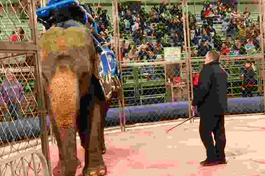 A circus show in Utah won't feature exotic animals for the first time