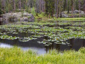 (Photo by John Fielder   Writers on the Range)  Homestake Creek wetlands in Colorado.