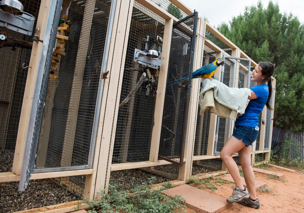 Leah Hogsten | The Salt Lake Tribune Best Friends caregiver Kaila Huhtasaari returns a macaw back to its pen after enrichment time and pen cleaning. The bird sanctuary swelled in numbers after Best Friends took in over 300 birds from a hoarding situation in Georgia. Best Friends saves thousands of animals every year as the nation's largest no-kill sanctuary, encompassing some 3,700 acres about 5 miles outside Kanab.