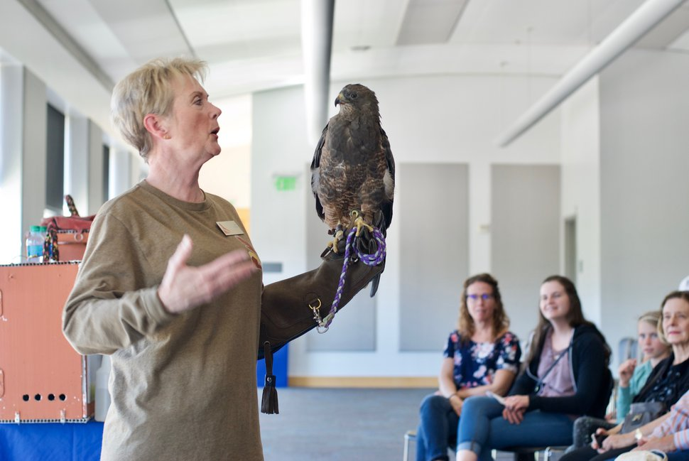 (Sara Tabin | The Salt Lake Tribune) Hawk Watch volunteer Julia Adams shows Aymara to the crowd.