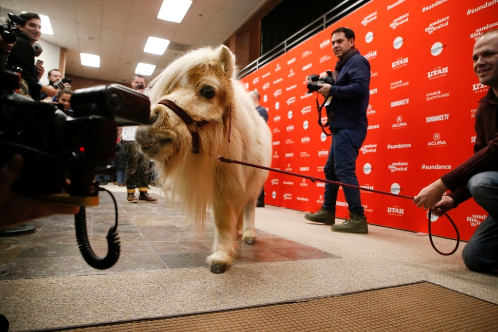 A miniature horse named Daisy, who appears in the film as a character named Butterscotch, poses at the premiere of Damsel during the 2018 Sundance Film Festival on Tuesday, Jan. 23, 2018, in Park City, Utah. (Photo by Danny Moloshok/Invision/AP)