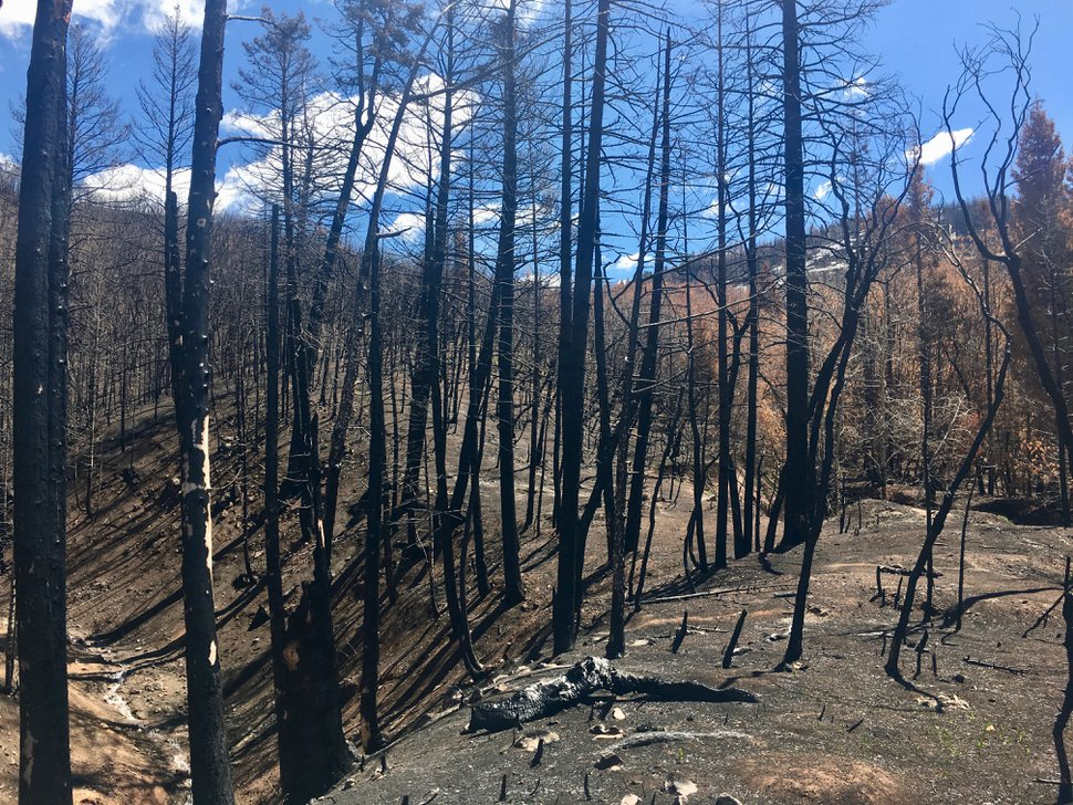 Brian Maffly | The Salt Lake Tribune Payson Canyon, pictured here on April 25, 2019, burned in Utah County's megafires last summer. Brigham Young University researchers have initiated a five-year study of runoff from a 144,000-acre area burned in the Pole Creek, Bald Mountain and Coal Hollow fires.