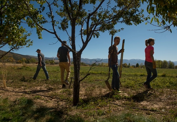 (Leah Hogsten   The Salt Lake Tribune) l-r Spencer Cox, sons Kaleb, 16, and Adam, 14 and wife Abby pull up plants in their garden at their home in Fairview, Utah.