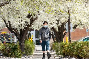 (Francisco Kjolseth  | The Salt Lake Tribune) Spring blossoms in Salt Lake City on Wednesday, April 7, 2021, mark the change of the season along with a transition of the mask mandates which will end statewide Saturday. However, Salt Lake City Mayor Erin Mendenhall said nothing will change in the capital.
