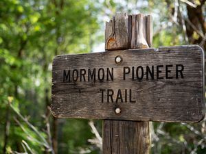 (Francisco Kjolseth  |  The Salt Lake Tribune) The hike along the West section of the Mormon Pioneer Trail from Affleck Park to Big Mountain Pass offers canyon views, numerous wildflowers, ample shade and requires a will to share the trail due to its popularity with mountain bikers.