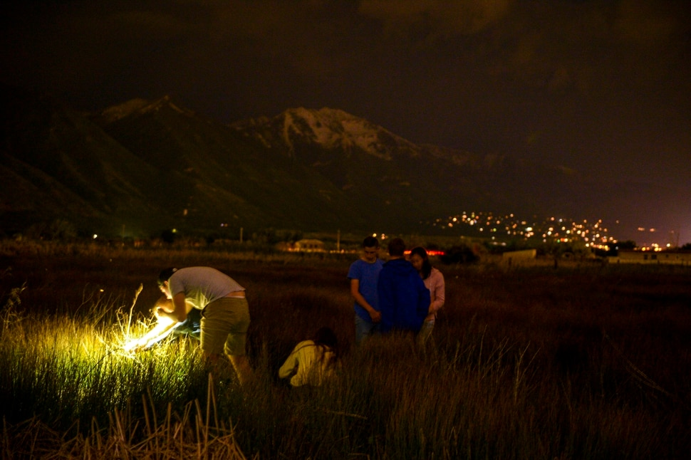 (Leah Hogsten | The Salt Lake Tribune) Visitors marvel at the sight of fireflies, many for the first time. Fireflies have been twinkling in the hay fields of Garcia's family farm, Thompson Century Farm near Spanish Fork, since her great-great-grandfather Samuel Thompson settled the farm in 1800s. The farm and its wet, marshy habitat is perfect for the fireflies' annual mating rituals every year, roughly from late May to early July. Garcia leads tours through her fields for free, simply to share in the experience and to educate others about fireflies, their short-lived lifecycle and what endangers their fragile habitat.
