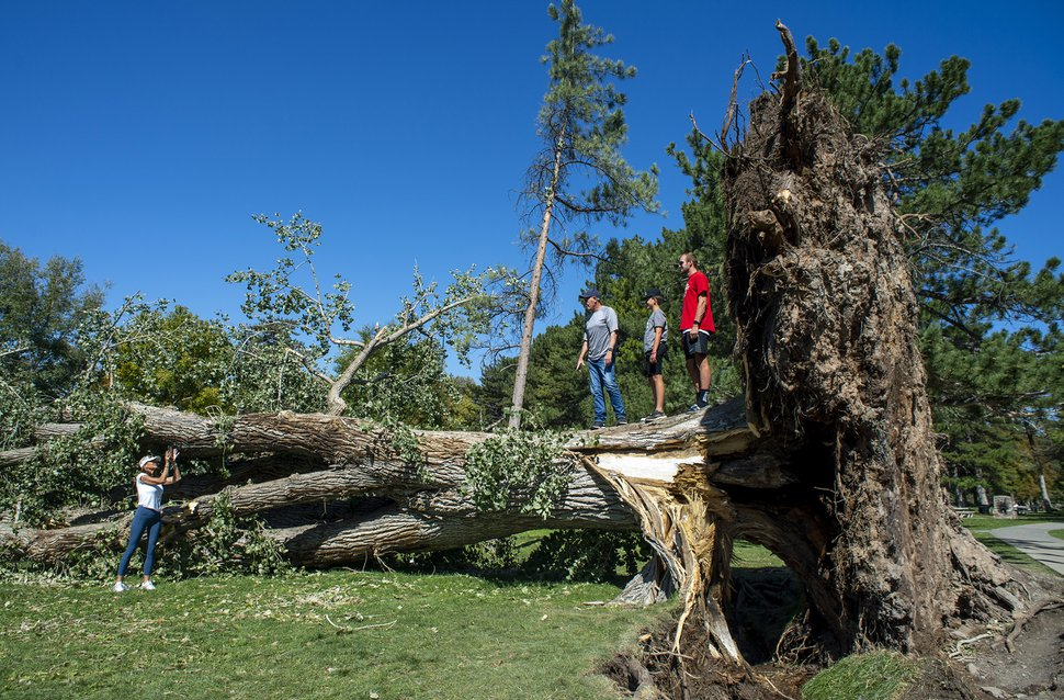 (Rick Egan | The Salt Lake Tribune) People pose for photos on one of the trees that was toppled by the heavy winds earlier this week at Liberty Park, on Saturday, Sept. 12, 2020.