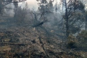 (Photo courtesy of Manti-La Sal National Forest) The 110-acre Crandall Fire in northwest Emery County was 60 percent contained as of the morning of Wednesday, April 25, 2018.
