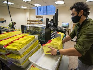 (Rick Egan     The Salt Lake Tribune)   Carson Adams prepares primary election ballots for counting at the Salt Lake County Government Center on Wednesday July 1, 2020.