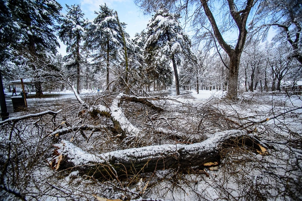 (Trent Nelson | The Salt Lake Tribune) Downed tree limbs in Salt Lake City's Liberty Park after a storm on Friday March 29, 2019.