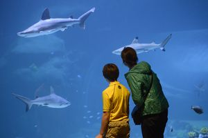(The Salt Lake Tribune archive photo) The Shark Tank at the Loveland Living Planetarium.