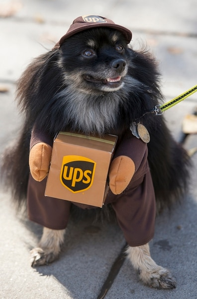 Here's how to avoid making your dog miserable this Halloween