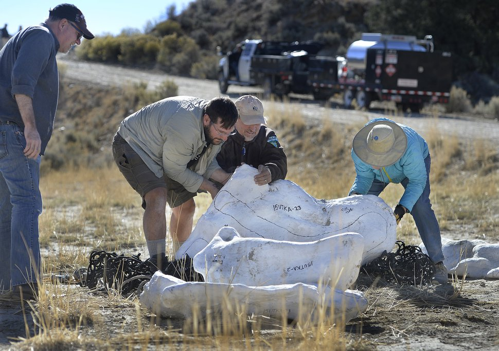 In this Sunday, Oct. 15, 2017, photo, Tylor Birthisel, left, Alan Titus, center, and Jeanette Bonnell, right right work to move some of the plaster-encased bundles of the fossilized Tyrannosaurus Rex skeleton found near Tropic, Utah. The nearly complete fossilized remains of a tyrannosaur found two years ago in southern Utah's Grand Staircase-Escalante National Monument were airlifted to the Natural History Museum of Utah on Sunday. Titus discovered the fossils in the monument's Kaiparowits Formation. (Scott Sommerdorf/The Salt Lake Tribune via AP)