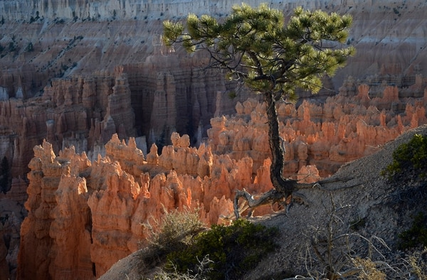 (Scott Sommerdorf | The Salt Lake Tribune) Sunset Point in Bryce Canyon National Park, Saturday, Oct. 14, 2017.