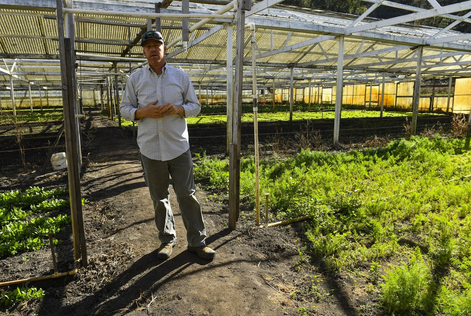 Eric Hollister, a pot grower, stands in one of the old greenhouses at Daylight Farms in Half Moon Bay, Calif. John and Eda Muller, who own the farm, have been struggling for some time to keep their business afloat. MUST CREDIT: Washington Post photo by Ricky Carioti