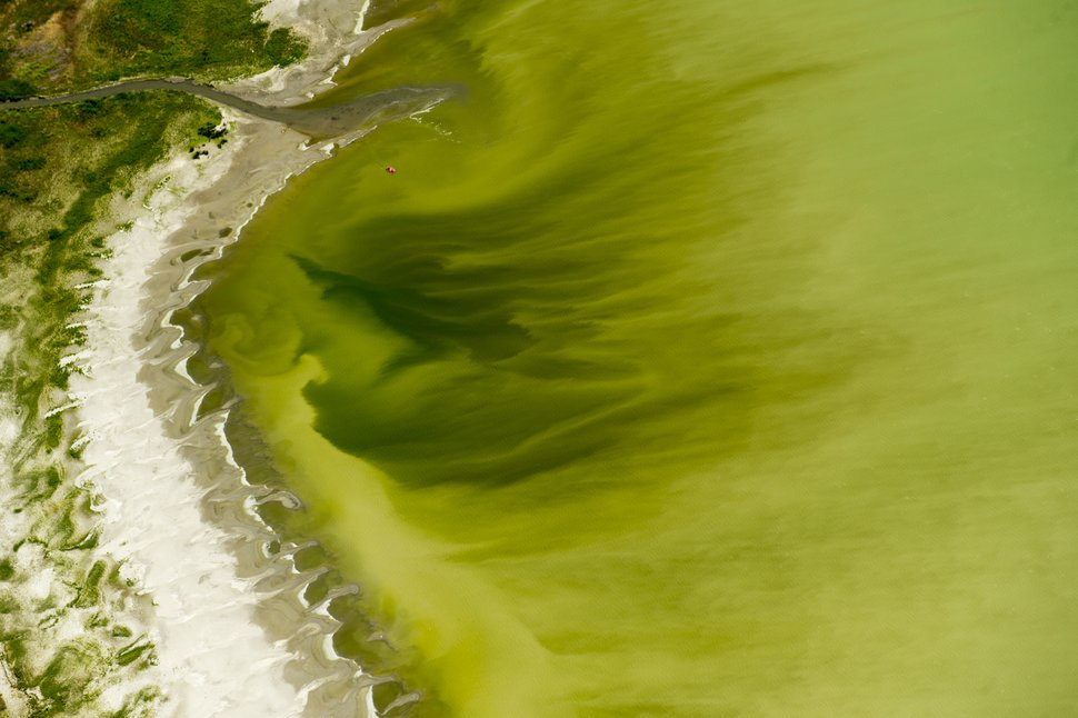 Rick Egan | The Salt Lake Tribune Discolored water in Utah Lake, near the Lindon Marina. Crews took samples of a mile-long algal bloom at Utah Lake on Wednesday evening. They'll know today if it's toxic and if they'll need to enforce closures. Thursday, July 14, 2016.