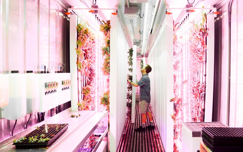 (Leah Hogsten | The Salt Lake Tribune) Reed SnydermanÕs hydroponic farm grows over 100 lbs. of leafy greens including butterhead lettuce, Toscano kale, basil, arugula, chard and more in vertical slats in a shipping container the equivalent of 1.5 acres, year round. ÒThe goal is better for you, better for the environment,Ó said Ascent Farms owner Reed Snyderman, while tending to his organic hydroponic grown lettuces and leafy greens that he grows in a recycled shipping container June 4, 2019. Snyderman will be selling his greens at this year's Downtown Farmers Market beginning this Saturday.