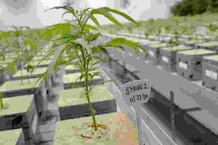 Utah's cannabis czar is leaving his job