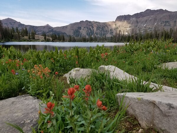 Jessica Miller   The Salt Lake Tribune Wildflowers were in bloom in mid-July during a hike to Ruth Lake.