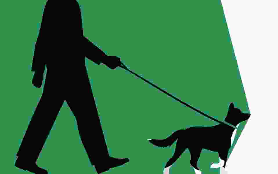 Frank Bruni: Dogs will fix our broken democracy