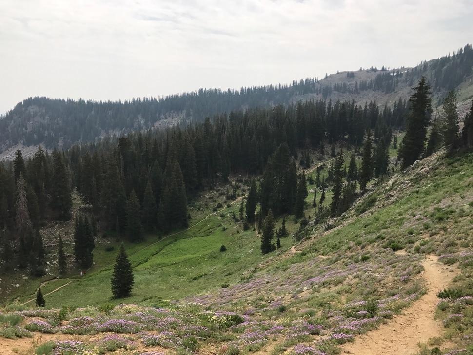 (Nate Carlisle   The Salt Lake Tribune) A trail leads to Luckawaxen Lake at Guardsman Pass on Aug. 7, 2017.