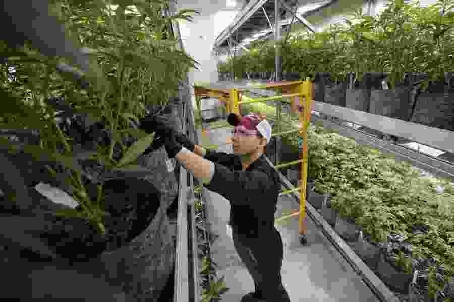 Utah is shopping for an electronic system to verify patients and track plants under the new medical marijuana law