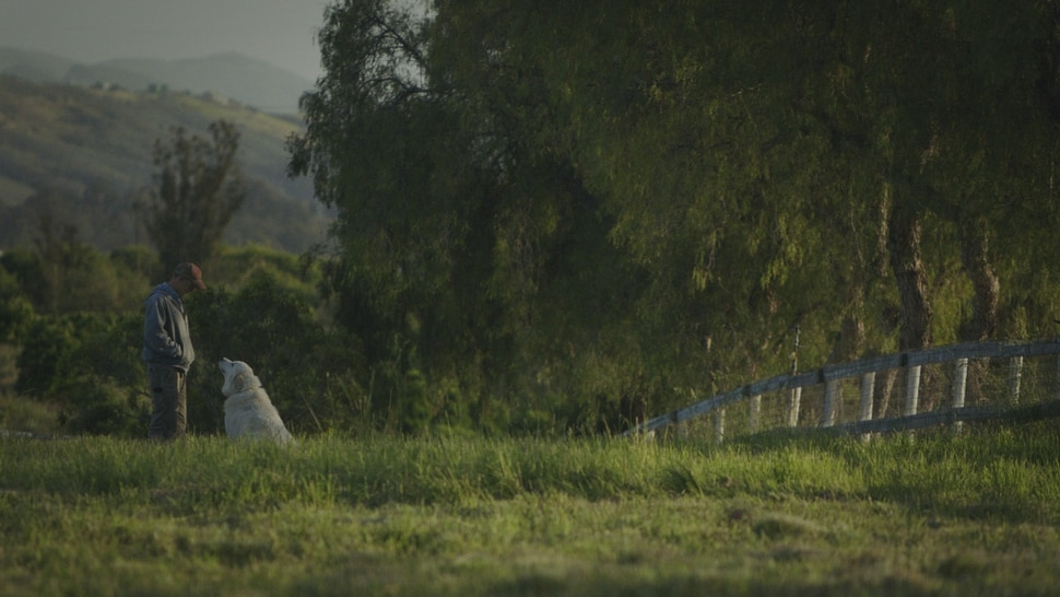 (Photo courtesy Sundance Institute) Filmmaker John Chester chronicles his family's attempt to create a farm in Ventura County, in The Biggest Little Farm, an official selection in the Spotlight program of the 2019 Sundance Film Festival.