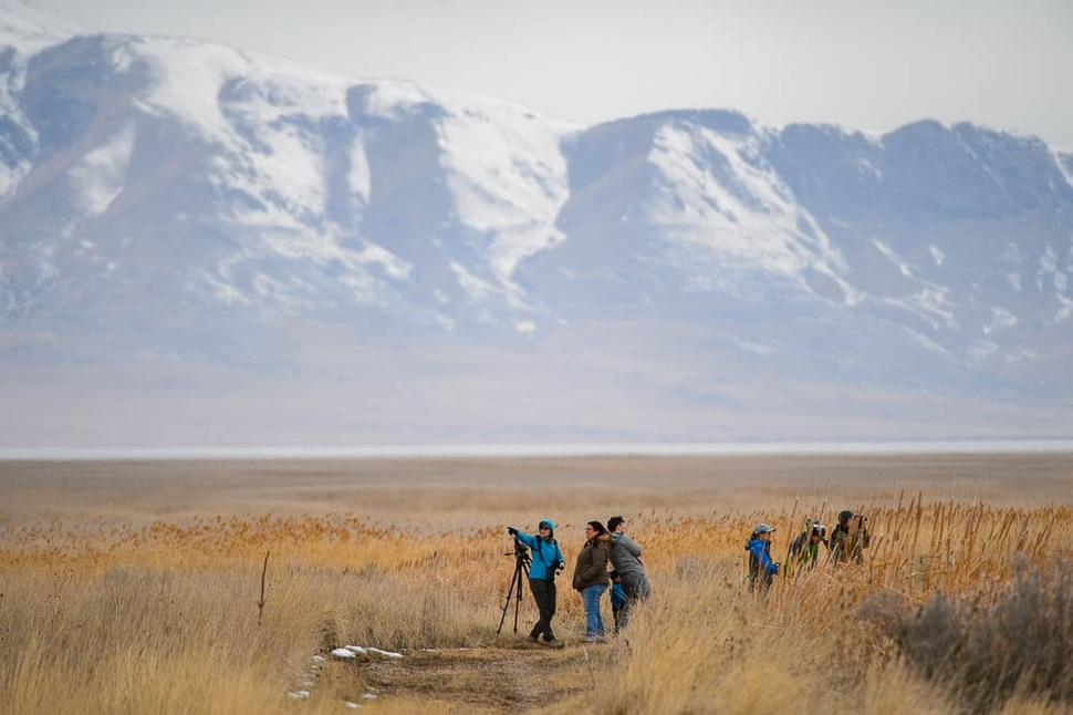 (Trent Nelson   The Salt Lake Tribune) Birdwatchers stand watch as Great Salt Lake Audubon hosts the 9th Annual Gullstravaganza, gull-watching event at Farmington Bay on Saturday Feb. 2, 2019.