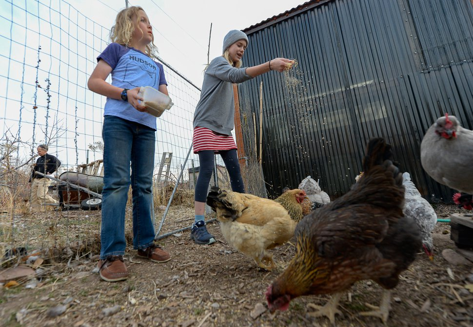 (Francisco Kjolseth | The Salt Lake Tribune) Quinn Porucznik, 10, left, and his sister Zoey, 13, feed the chickens that live in the community garden a few feet away from their home at the end of Elizabeth Street in Salt Lake City on Tuesday, Nov. 19, 2019. The Poruczniks grow on one of the 42 plots at the garden, which has operated on church land for 43 years.