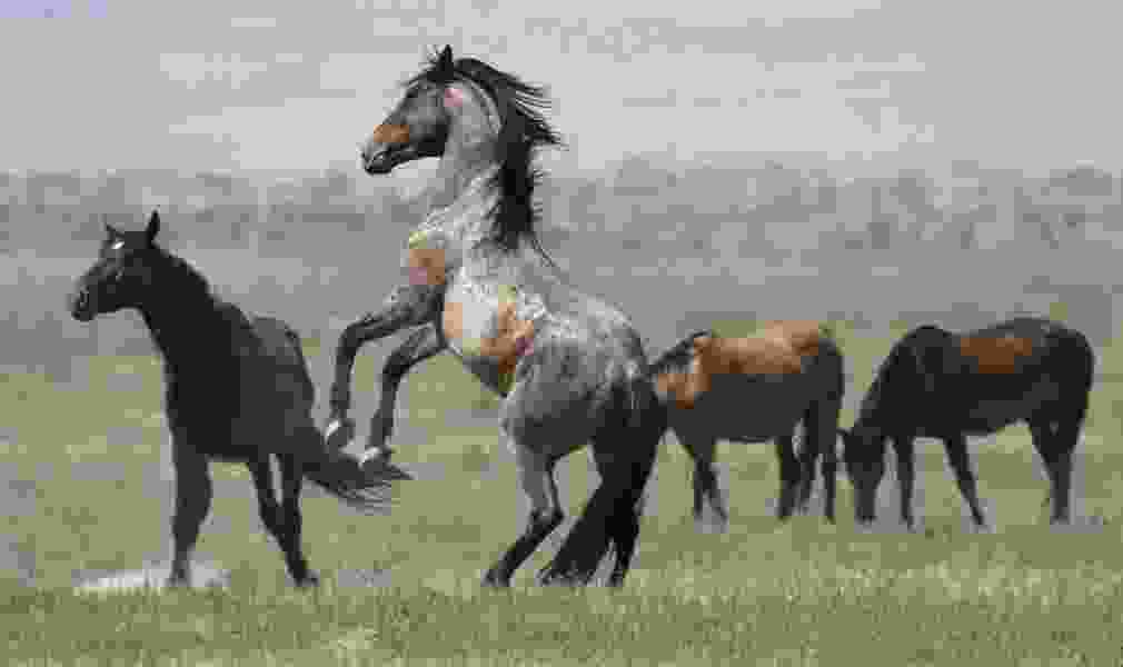 William Perry Pendley: America's wild horses and burros need our help