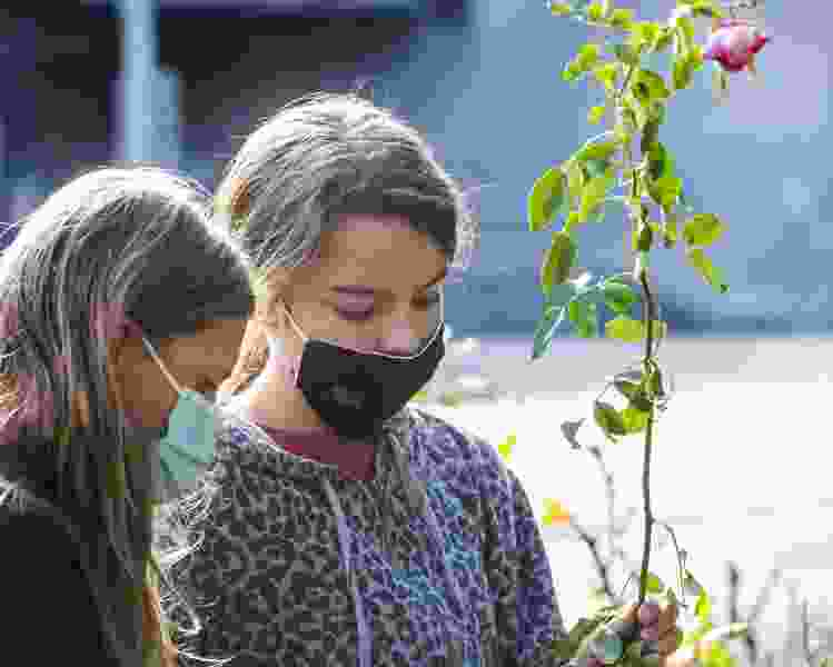 Rose-rescuers save beloved blooms from demolition site
