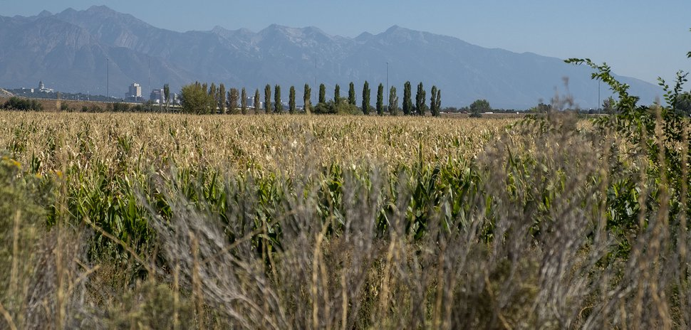 (Leah Hogsten   The Salt Lake Tribune) Land on the existing Cross E Ranch, owned by siblings Heather Limon and Dalon Hinckley, is part of a proposed residential neighborhood on 350 acres near the Salt Lake City Airport.
