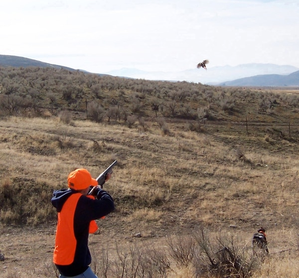 (Courtesy Alan Peterson) This fall's pheasant hunt runs for 30 days on both private and public land in Utah. The hunt opens Nov. 4.