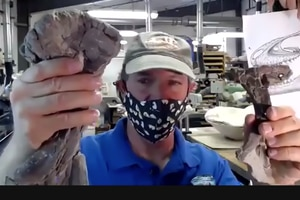 (Screenshot) Bureau of Land Management paleontologist Alan Titus displays skull bones from tyrannosaur specimens recovered in Utah's Grand Staircase-Escalante National Monument. The discovery of several tyrannosaurs that apparently died together provides compelling evidence that the fearsome predatory dinosaurs lived and hunted in groups. Monday, April 19, 2021.