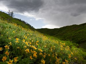 (Photo courtesy of Anthony L. Solis) | Bright yellow balsamroot flowers speckle the foothills around which winds the Wild Rose Loop Trail in North Salt Lake City on Wednesday, May 19, 2021.