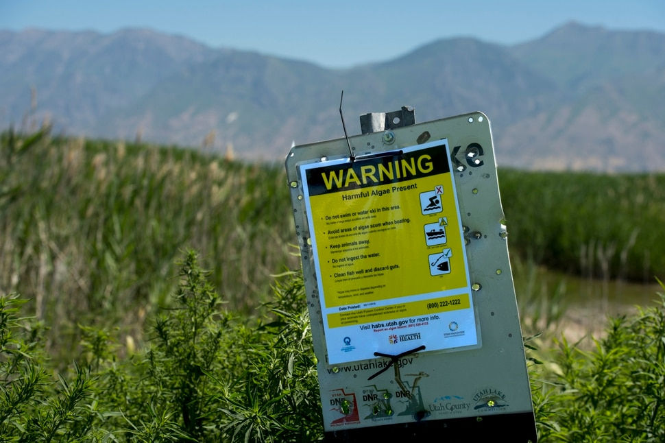 (Rick Egan | The Salt Lake Tribune) Signs near Provo Bay worn of harmful algae on parts of Utah Lake. Water experts are urging visitors to keep themselves, their pets and other animals out of Provo Bay after detecting a potentially toxic blue-green algal bloom there, Tuesday, June 12, 2018.
