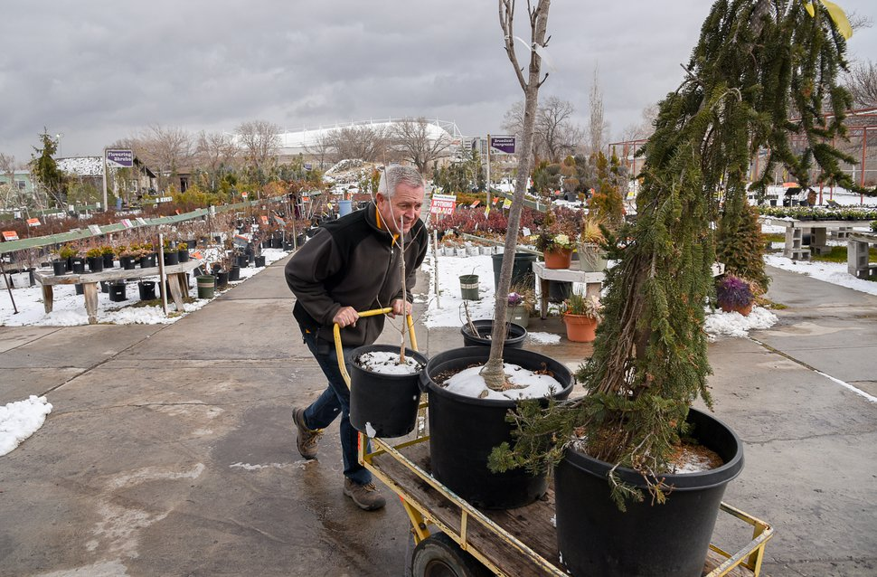 (Francisco Kjolseth | The Salt Lake Tribune) Loren Nielsen, owner of Wasatch Shadows garden and landscape center in Sandy wheels trees out to a customers on the last official day of business on Wed. Dec. 12, 2018. Nielsen and his wife Debbie plan to stay until it is all gone with limited store hours. After 42 years the two are retiring. They have sold the 10 acre plot, just west of the Real Soccer Stadium, in background, to Sandy City for future development.