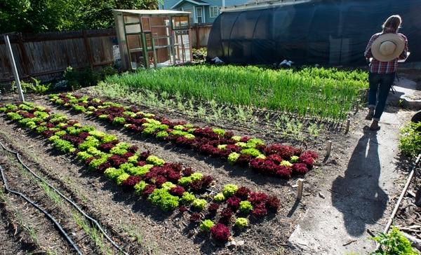 (Rick Egan | The Salt Lake Tribune) Amanda Theobald in her Top Crops urban farm in her backyard in Salt Lake City, Tuesday, June 5, 2018.