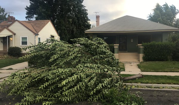 Wild winds slam northern Utah, knocking over trees and forcing school closures