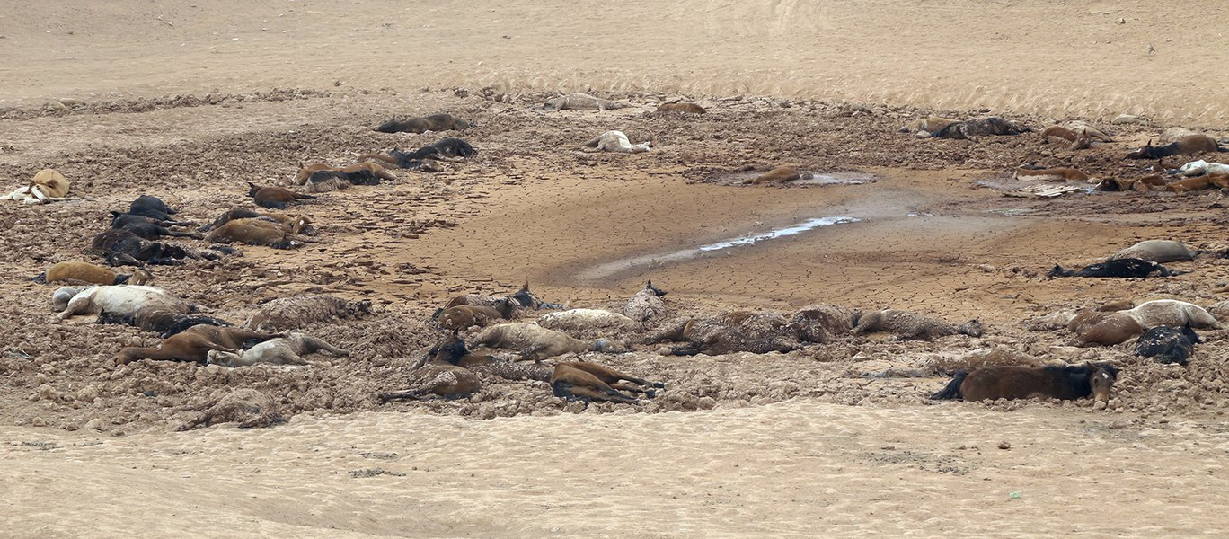 Dozens of wild horses found dead amid Southwest drought