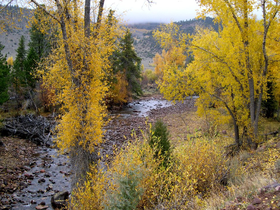 (Courtesy U.S. Forest Service) The Yellowstone River runs during fall colors in Ashley National Forest.