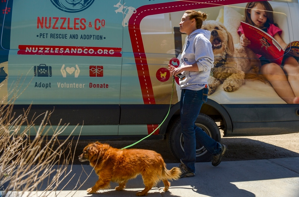 (Leah Hogsten | The Salt Lake Tribune) A Nuzzles & Co adoption specialist walks Kelly, a spaniel mix adopted from the Navajo Nation. Salt Lake City car seller Mark Miller Subaru has contributed an estimated $120,000 and 2,000 service hours to Nuzzles & Co, a no-kill nonprofit in Peoa. The car dealer is one of the first Utah businesses to adopt a new state Benefit LLC legal status, balancing doing social good with making profits.