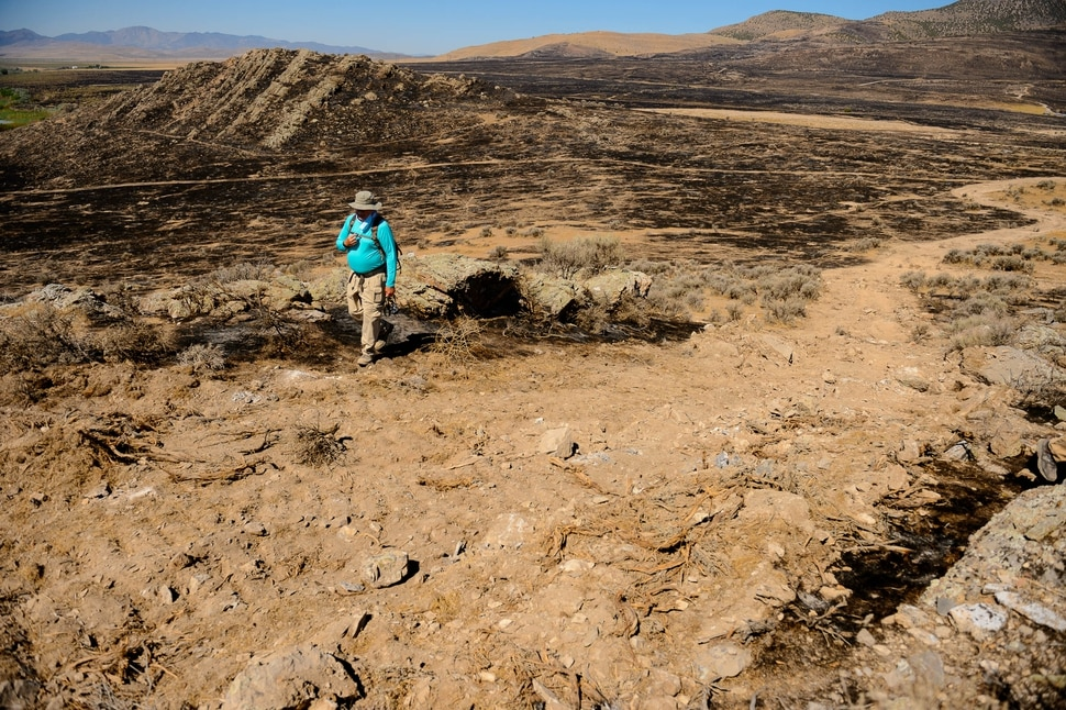 (Trent Nelson | The Salt Lake Tribune) Randy Griffin assesses the damage caused by a firebreak bulldozed through the Adelbert Doyle Smith Family Preserve on Utah Lake's west shore on Monday, July 6, 2020.
